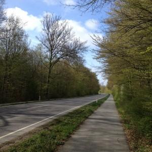 Danska cykelstig genom nyutslagen bokskog