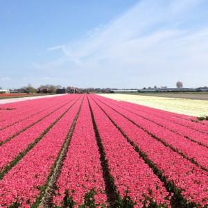 Här doftar det blomsterhandel